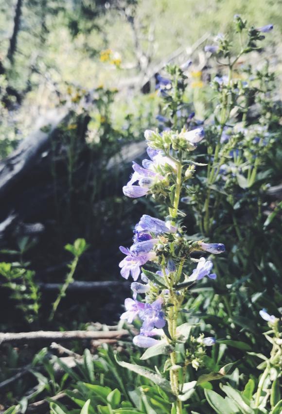 Manitou Incline: Colorado Springs